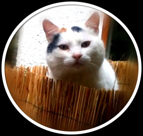 Willow Glen - Snow the cat